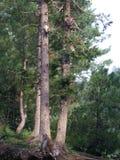 Tree full of mokeys stock photo