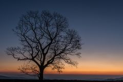 Tree in full silhouette at sunrise Royalty Free Stock Photo
