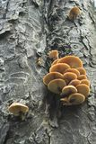Tree Fungi Stock Photos