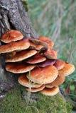 TREE FUNGI Stock Image