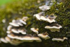Tree fungus closeup Stock Photos