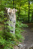 Tree Fungus And Forest Path Stock Photography