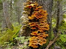 Tree fungus Stock Photos