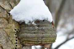 The tree and the fungus in the holes of the nest snow ice stock photos