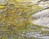 Tree fungus or rust on bark of tree trunk Stock Image
