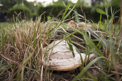 Tree fungus. White tree fungus in the grass under the summer overcast sky Stock Images