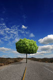 Tree for the future Royalty Free Stock Images