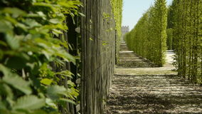 Tree galleries at Versailles garden. France. Tree galleries at the gardens of royal palace of Versailles in France. The shot is taken at one of the pleasure stock footage