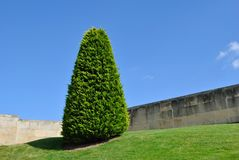 Tree in a garden Royalty Free Stock Photography