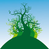 Tree garden. Illustration (vector) of abstract trees designed for help Stock Images