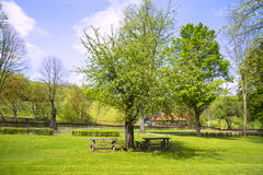 Tree in the garden and benches Royalty Free Stock Images