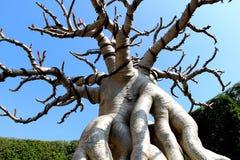 Tree1 Stock Photo