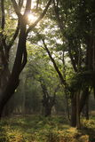 Tree garden in Cubbon Park at Bangalore India Royalty Free Stock Image