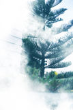 Tree garden fog Stock Photo