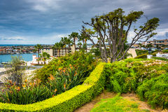 Tree and garden overlooking houses in Corona del Mar stock photos