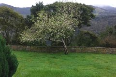 The tree in garden. Stock Images