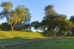 Tree garden Stock Photo