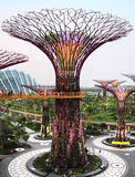 Tree at Gardens by the Bay Stock Image