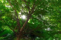 Tree gardren view from gate corridor with sunlight and sun shade. In warm shady or pleasant concept Royalty Free Stock Photos