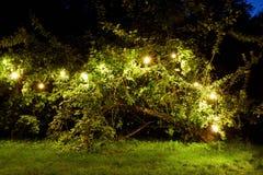 Tree with garland lights at night summer garden Stock Image