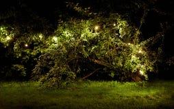 Tree with garland lights at night summer garden Stock Photo