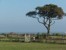 Tree and gate on an Essex Island Stock Photography