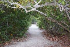 Tree gate Stock Image
