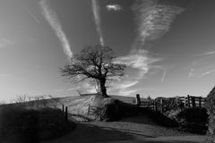 Tree and gateway. A rural scene of an old farm gate and fields in black and white Royalty Free Stock Images