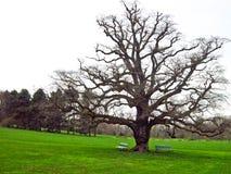 Tree in Geneve, Switzerland. Leafless tree in a park in Geneve, Switzerland Stock Images