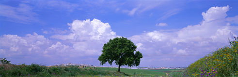 Tree, Germany Royalty Free Stock Images
