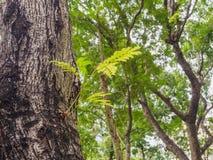 The tree is germinated . The tree is germinated in The tree Stock Photo