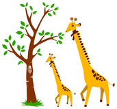 Tree and Giraffe Stock Photo