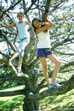 Tree Girls Stock Images