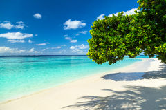 Tree giving shade on tropical paradise beach Stock Image