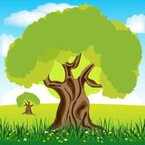 Tree on glade Royalty Free Stock Photography