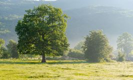 Tree on a glade at the river stock images