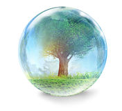 Tree in glass ball Stock Photo