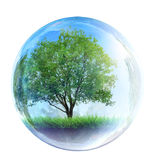 Tree in glass bubble. On white Stock Photo