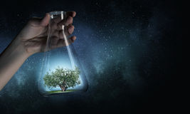 Tree in glass flask Stock Images
