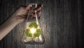 Tree in glass flask Royalty Free Stock Photos
