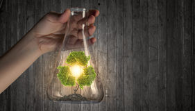 Tree in glass flask Royalty Free Stock Images