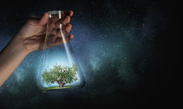 Tree in glass flask . Mixed media Royalty Free Stock Image