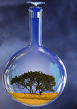 Tree in glass retort Stock Photos