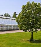 Tree and glasshouse Royalty Free Stock Photo