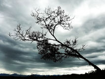 Tree gloom. Tree prostrate before the gloomy afternoon royalty free stock images