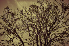 Tree gloomy. Moody saddening image of a tree with darkened sky in background. beautiful branches Royalty Free Stock Photos