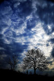 A tree in the gloomy sky Royalty Free Stock Photo