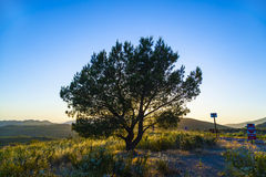 Tree in the glow of sunset Royalty Free Stock Images