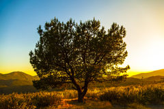 Tree in the glow of sunset Royalty Free Stock Photos