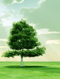 Tree in the god rays Stock Images